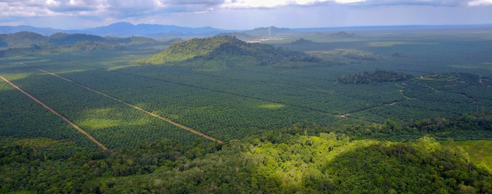 Village forests in an oil palm landscape: can they co-exist?